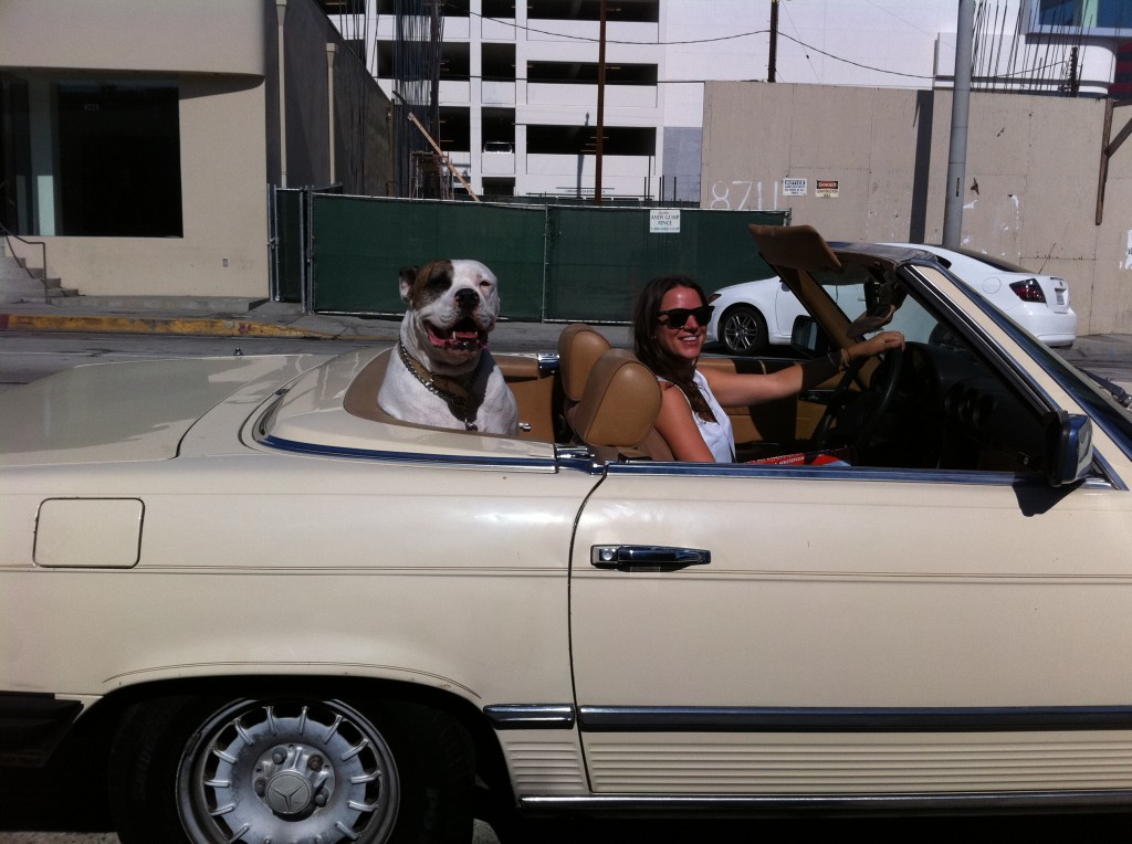 dog in a convertible