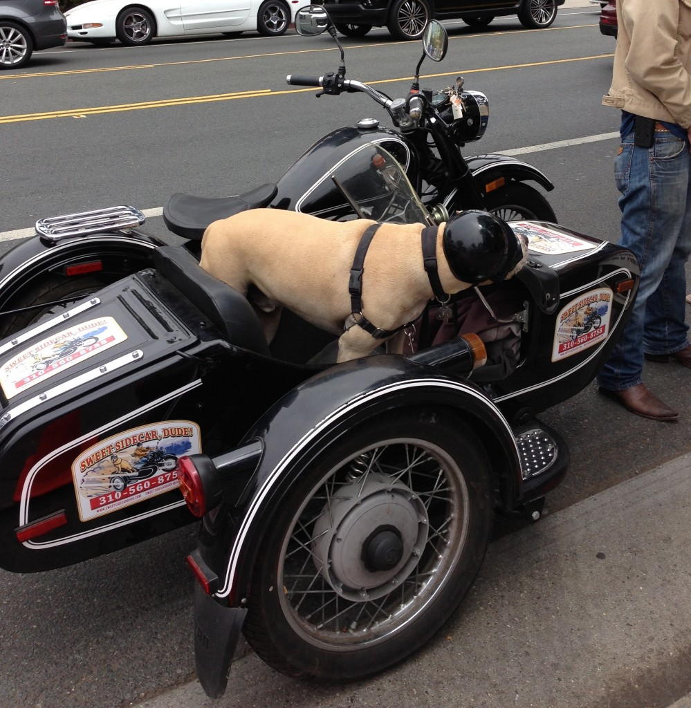 dog in a sidecar