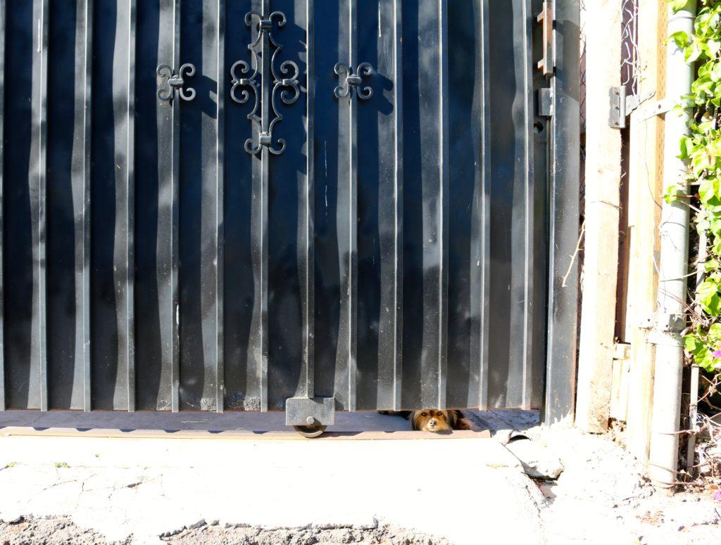 doggie behind fence