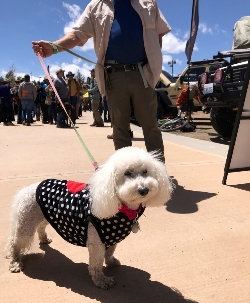 dog in heart vest