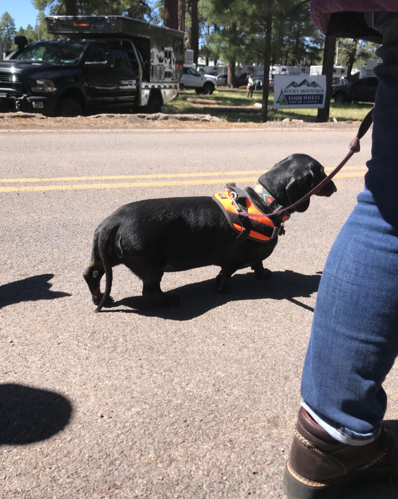 dachshund overland expo