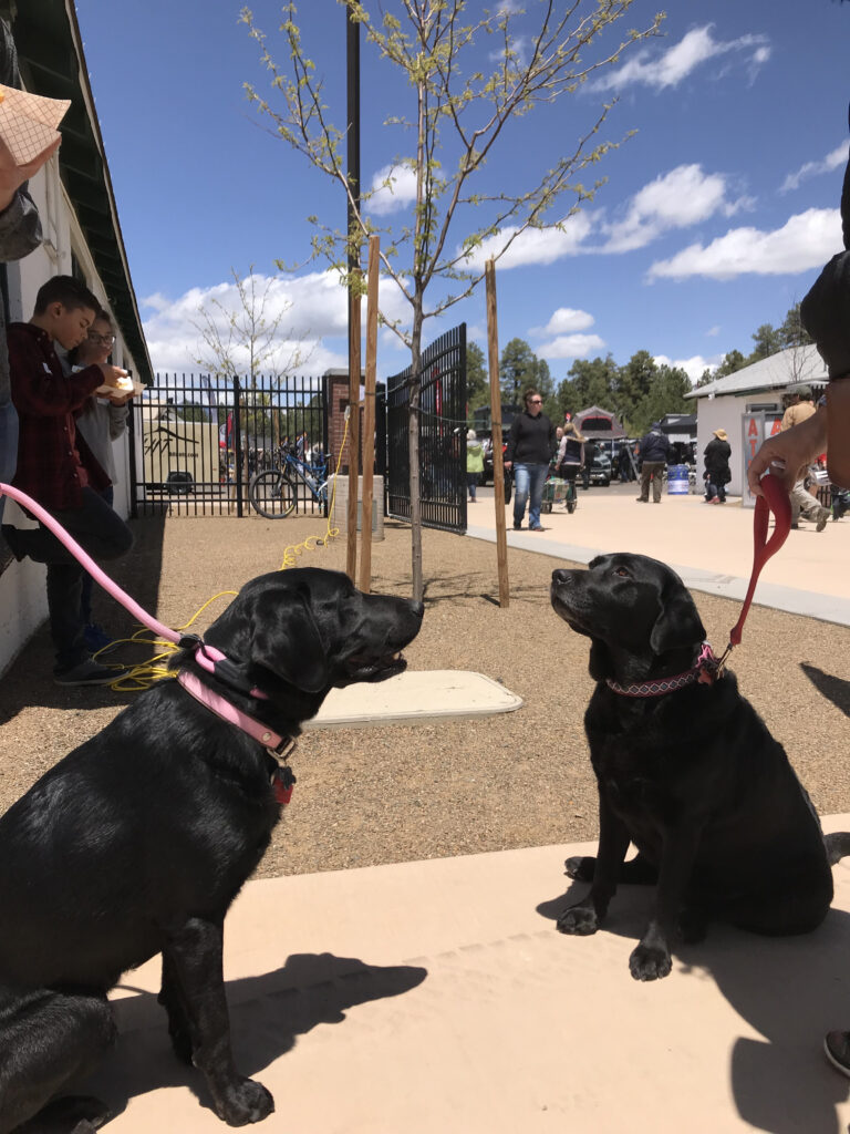 overland expo dogs